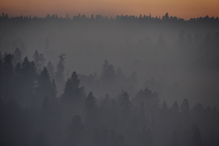 smoky trees2_Ssi