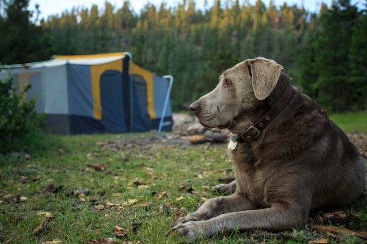 journey tent turnPSi