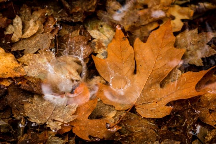leafsplash2PSi.JPG