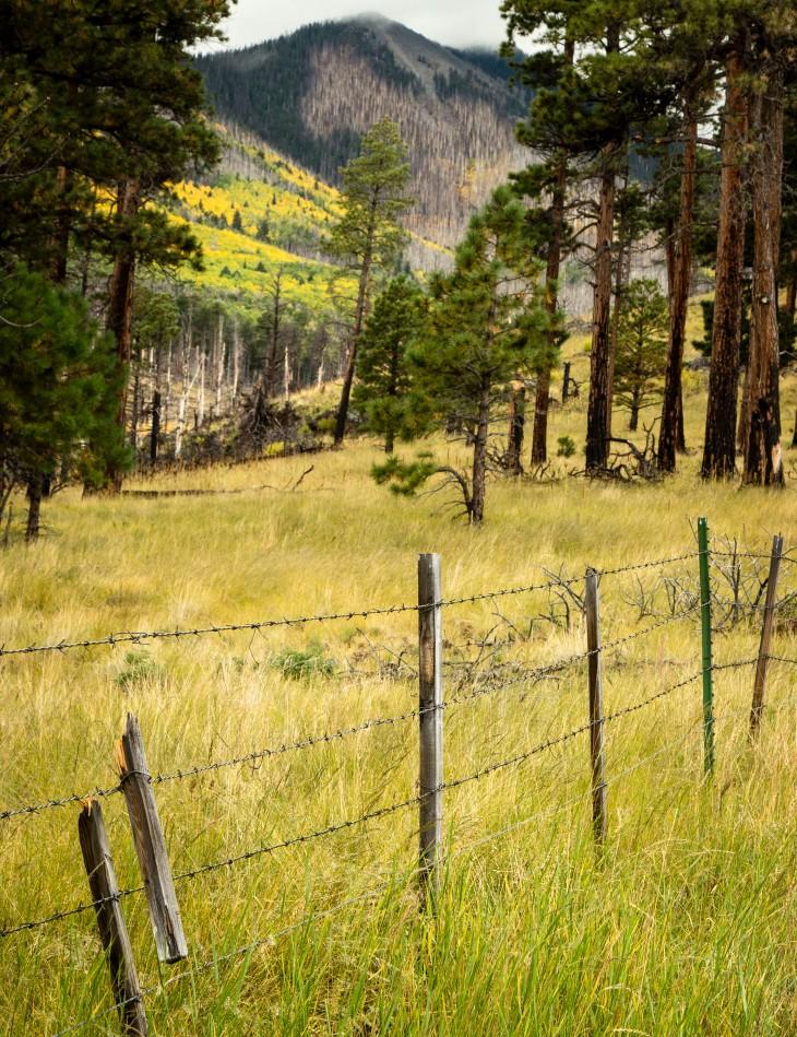 fencegrassPS.jpg