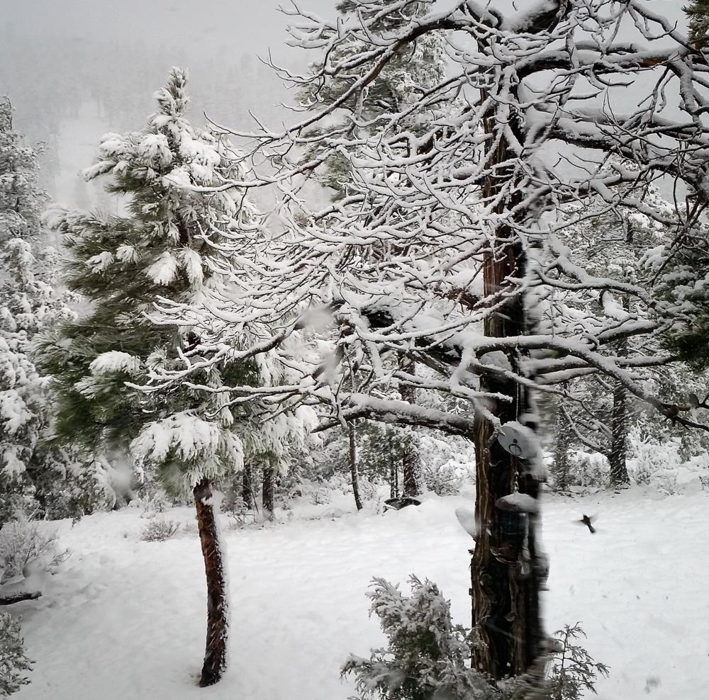 jayflt snow_IR.jpg