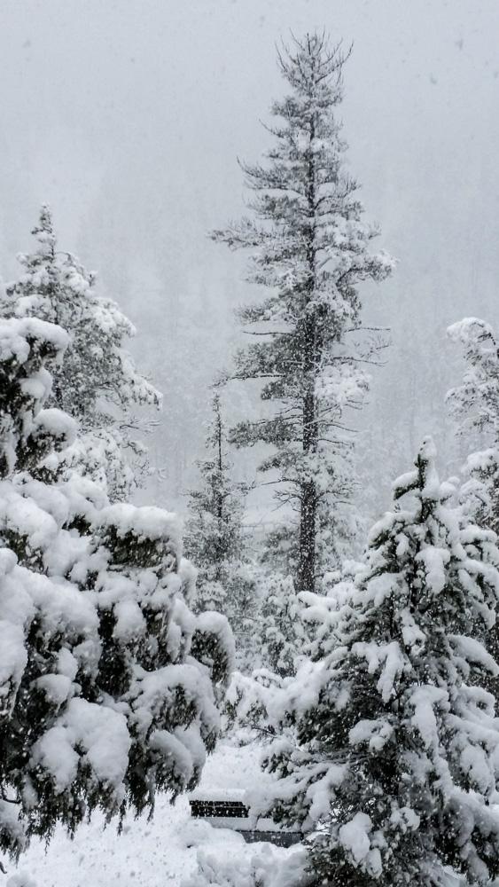 snowtreetall_IR.jpg