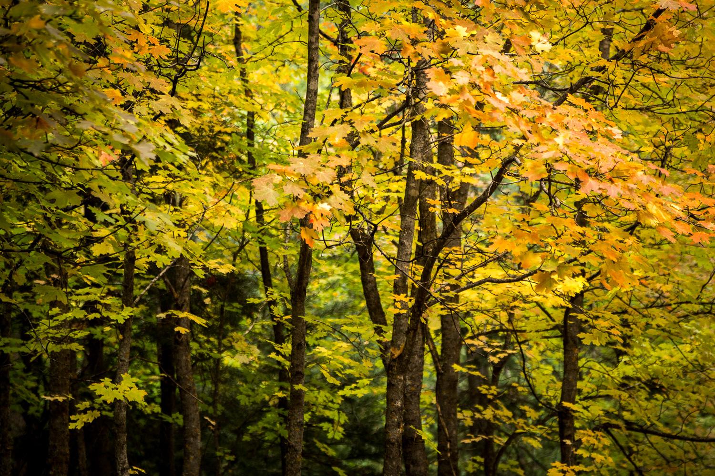 lil trees_IR.jpg