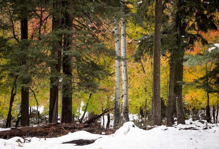 SnowColor_IR.jpg