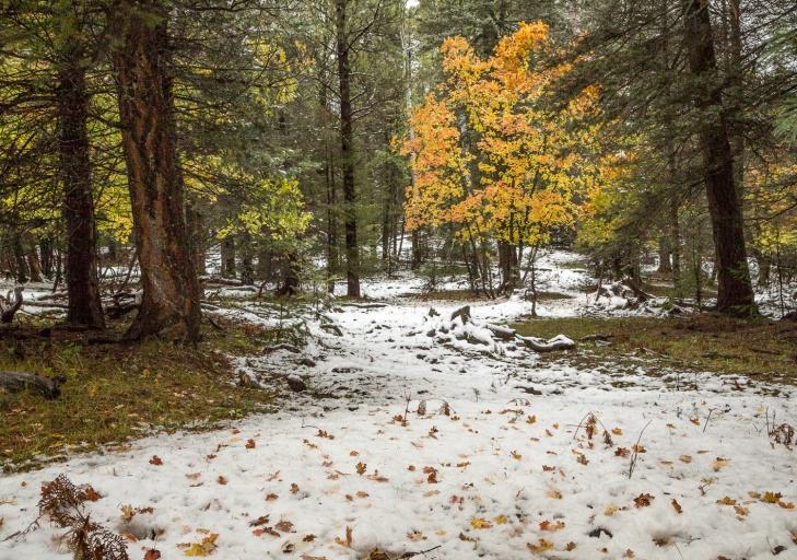 SnowPath_IR.jpg