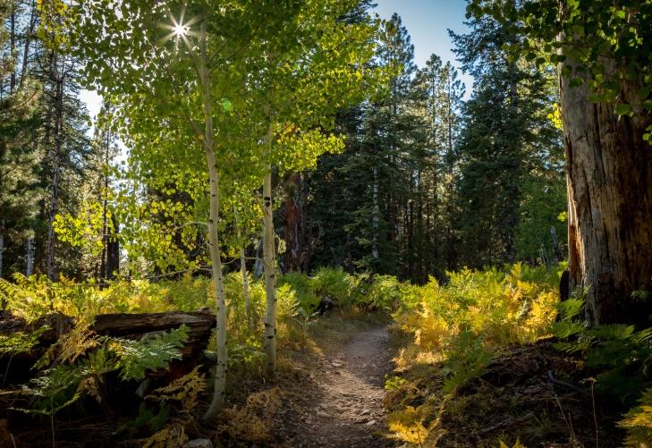 widforss trail star_IR.jpg