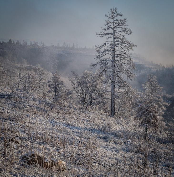 snow skel_IR.jpg