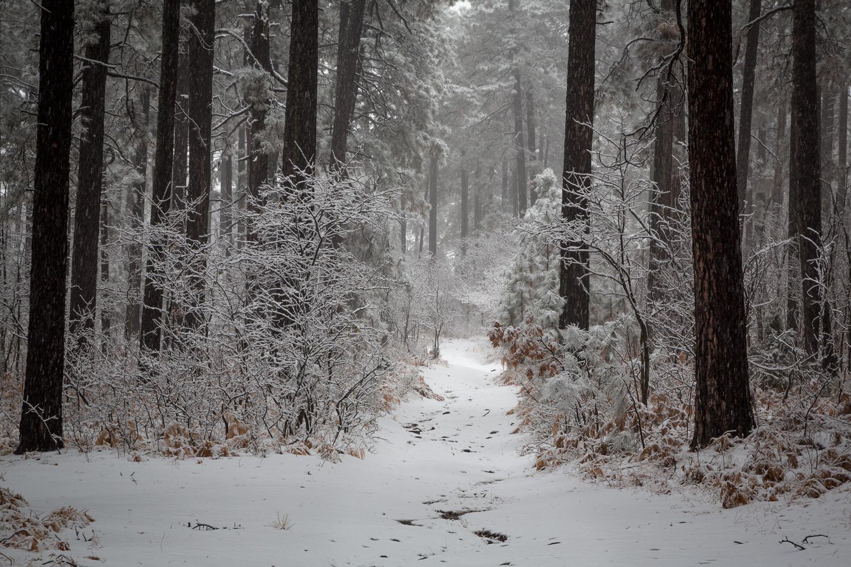 snowytrail_IR.jpg