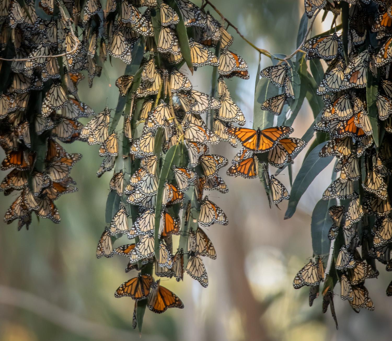 Butterfly Bridge_IR.jpg