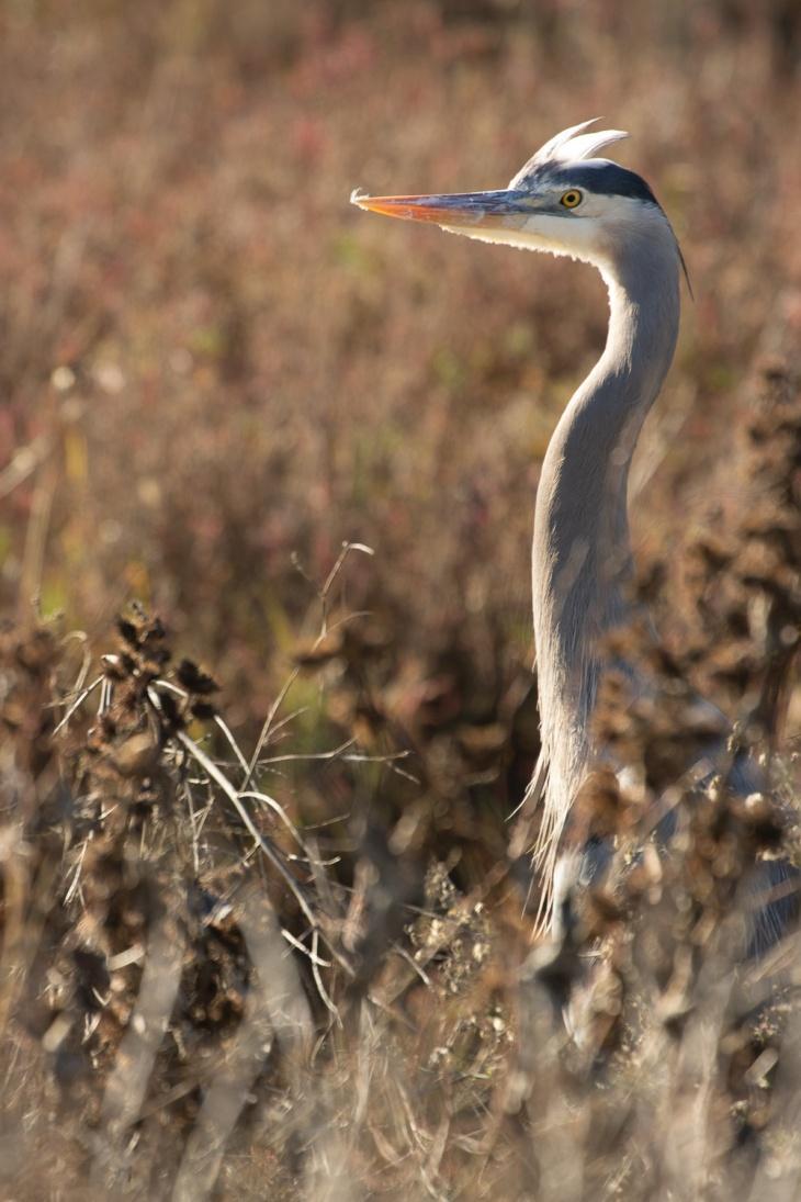 Heron Cranes_IR.jpg