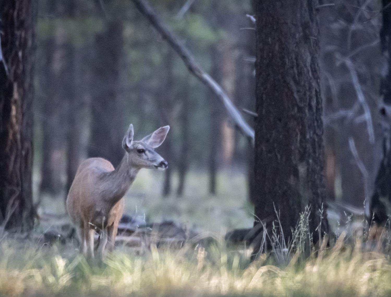 DeerWoods_IR.jpg